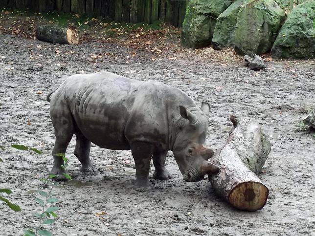 94. Rhino.