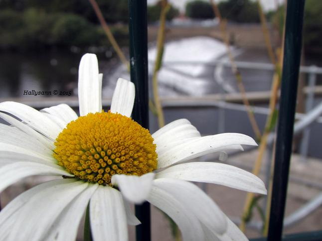 2015-09. Part daisy.
